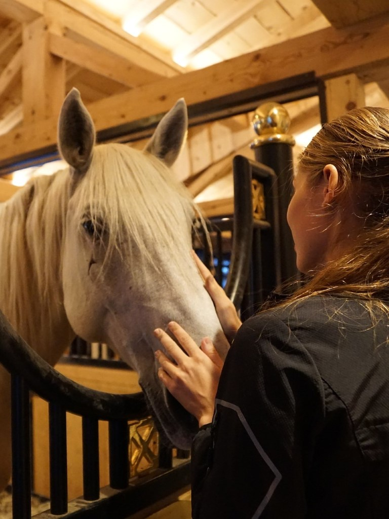 MaroWays Stroking the lipizzan hors in the ancient park stables of the Lipica stud farm with MaroWays