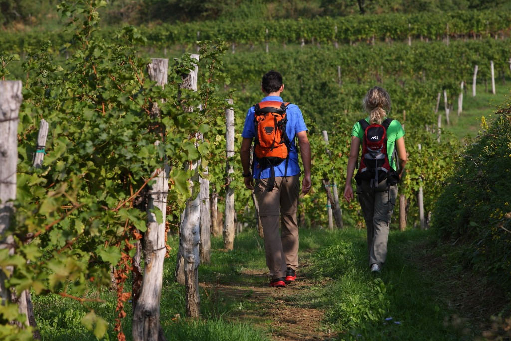 MaroWays Hikers on the Alpe-Adria Trail walking over the rolling hills of the Friulano and Slovenian Collio