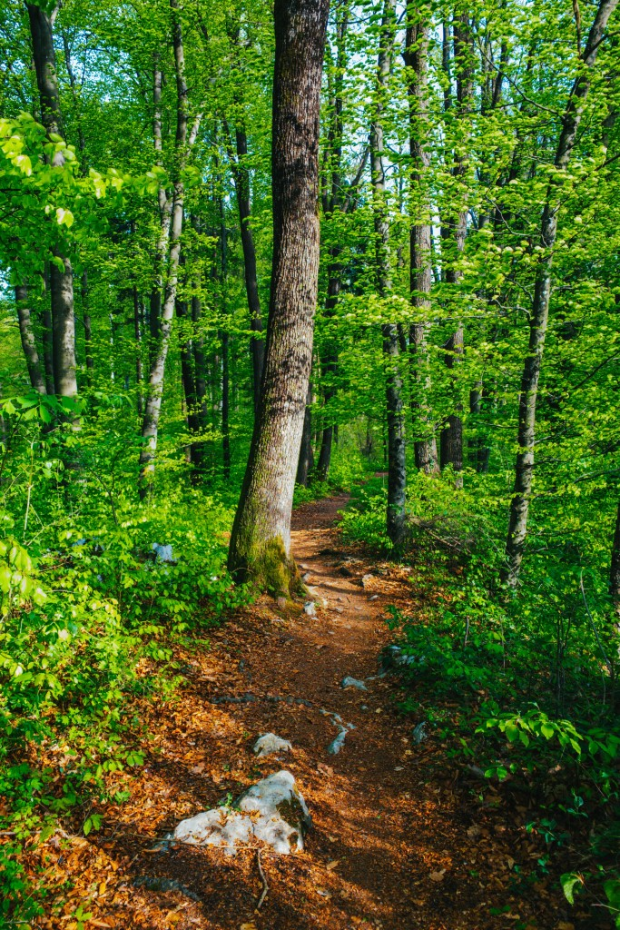 MaroWays Walking path in the forest of Alpe-Adria Trail